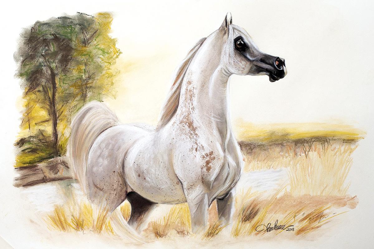 The Art Of The Arabian Horse Arabianhorse Com Au