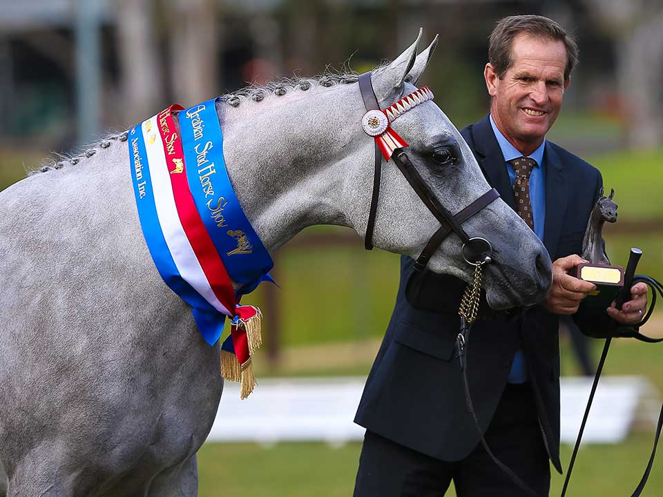 Champion Junior Anglo Arabian Allegation, Norm, Jeanette and Danial McDonald