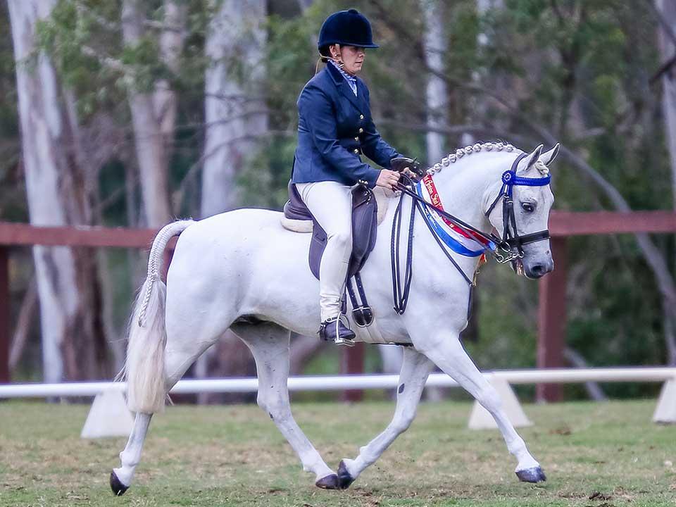 Champion Ridden Arabian Pony Arpege Park Arch Angel, Amelia Shorland