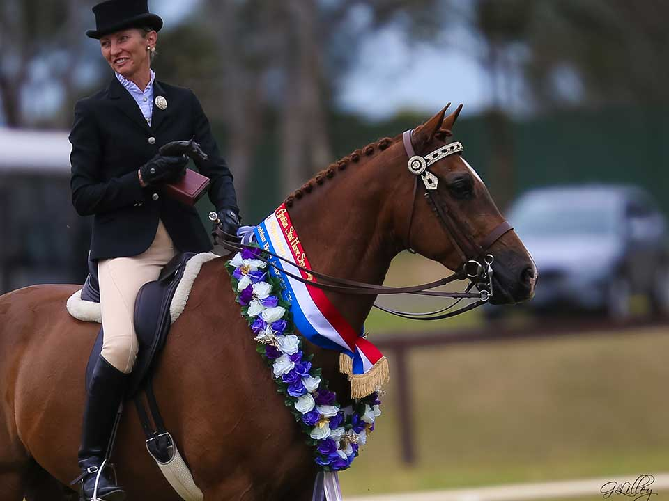 Arundel House Rockstar was awarded Champion Ridden Partbred Gelding with Angela Delamont