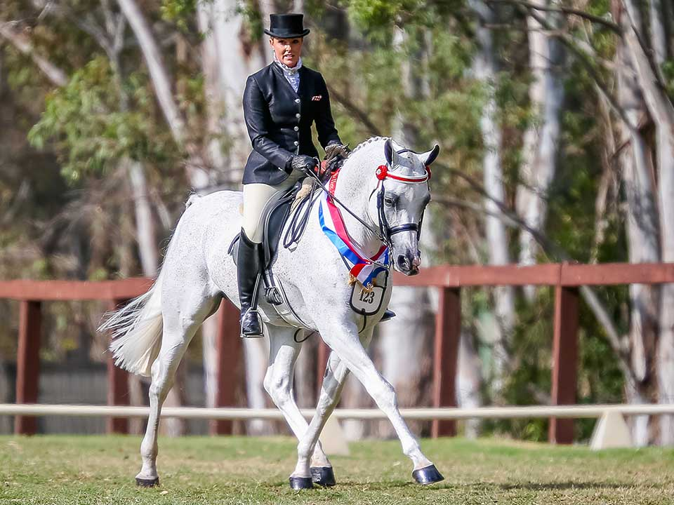 Aamahni, Champion Purebred Bridlepath Hack with Jayna Bonney