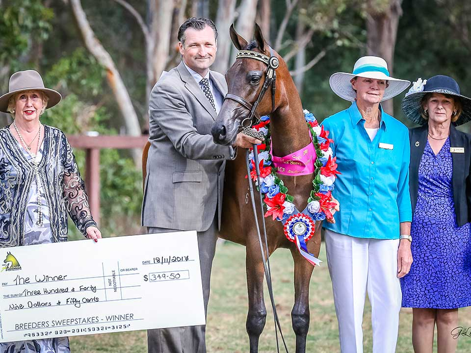 Elegance FF was the Derivative Breeders Sweepstakes winner, Future Farms