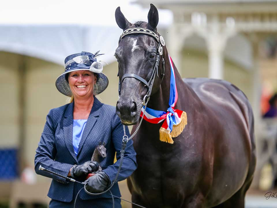 Aloha King's Realm, Champion Senior Anglo gelding, Melynda Tollman