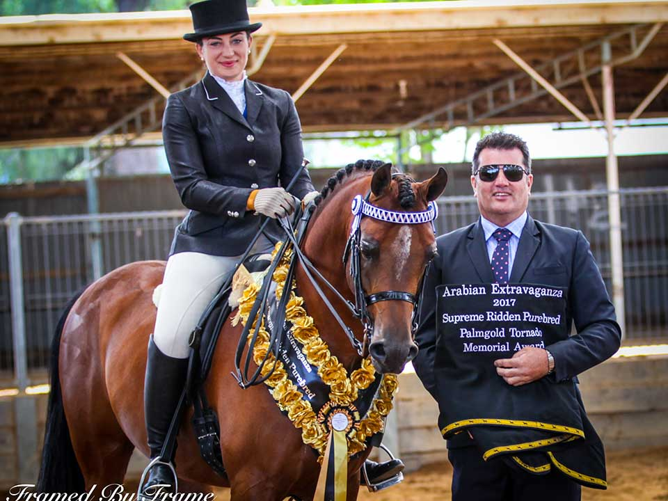 Supreme Ridden Purebred Mystica Abbas, owned by South Serenity Arabians, ridden by Elouise Lando with Judge Paul Austin