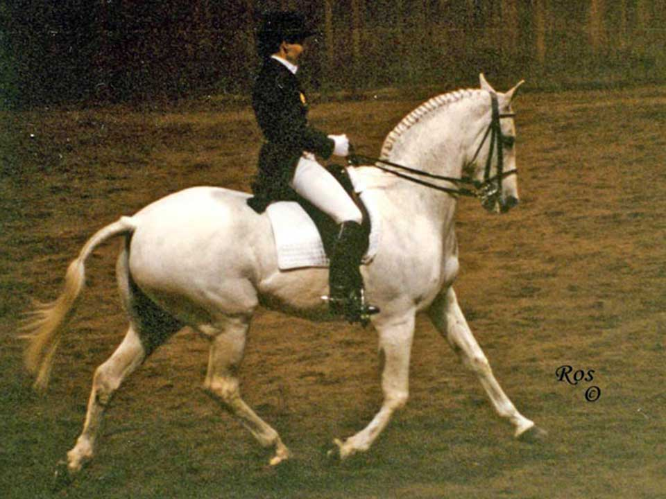 Bawara Touch of Class (Amadeus) was a top dressage horse of his era