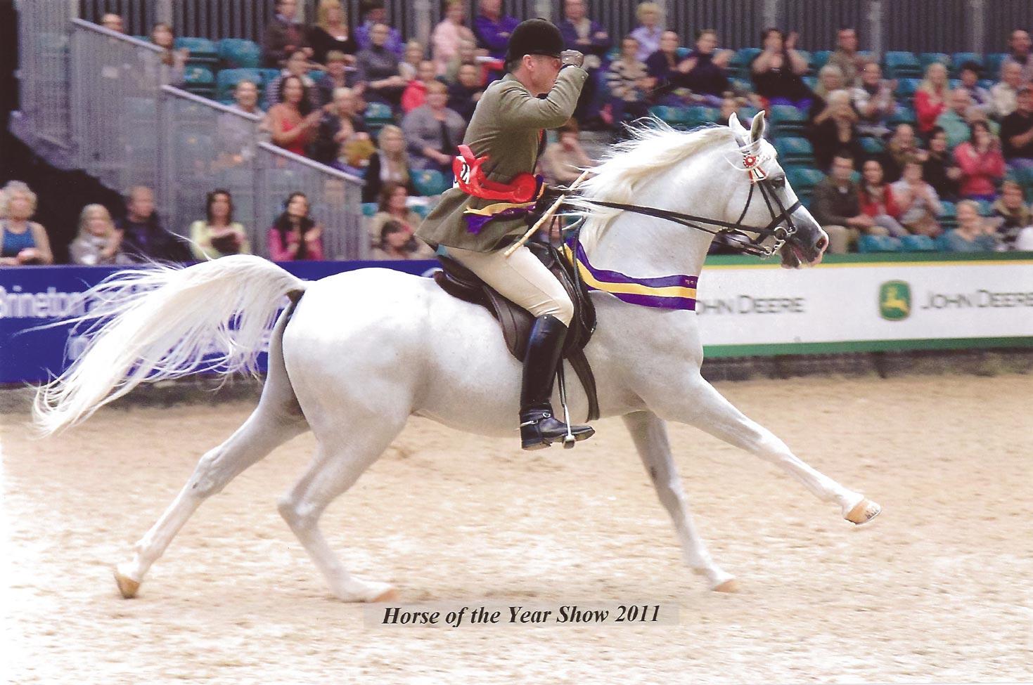 Princey-winning-at-HOYS-2011
