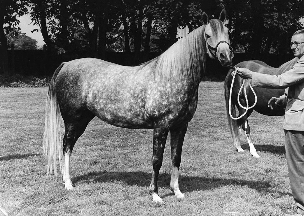 Silver-Grey---Kempton-with-Cecil-Covey---Photonews