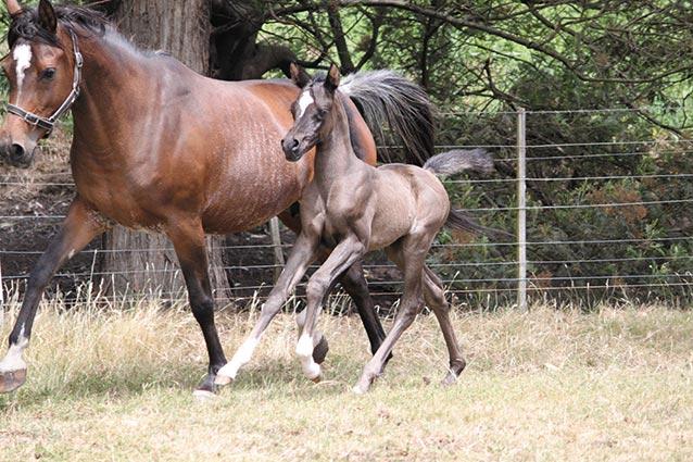 foals-2012-050